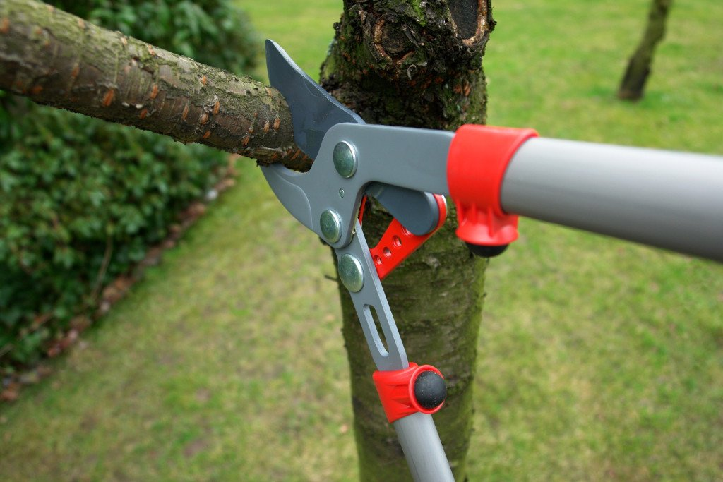 Tree removal service, spring and Fall clean up cut trees branches Prunning