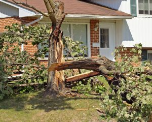 Emergency Tree Removal ServcieA